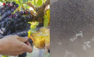 Winemaker Seminar: From Vine to Style @ Rideau Vineyard | Solvang | CA | United States