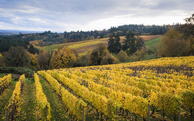 The Ultimate Guide To Oregon Pinot Noir: A Guide For Wine Lovers