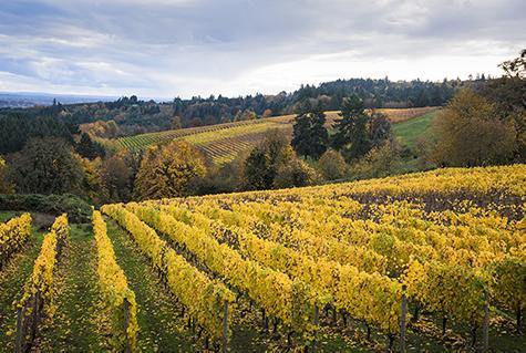 Willamette Valley Pinot Noir Road