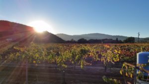 Cigars under the Stars 2 @ Solis Winery | Gilroy | CA | US