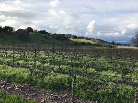 larson-winery