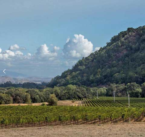 ramsgate-winery