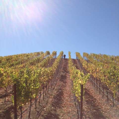 carica-wines