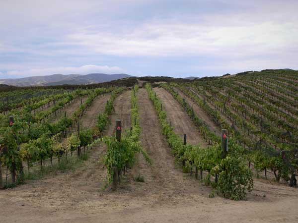 michaud-vineyard-photo-600px