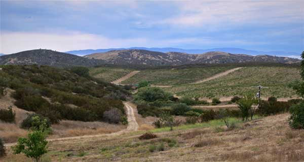 michaud-vineyard-rolling-hills-600px
