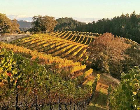 fortrossvineyards_pic