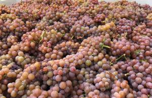 September Tasting Room Open House - Name that Grape @ Tasting Room | Healdsburg | CA | United States