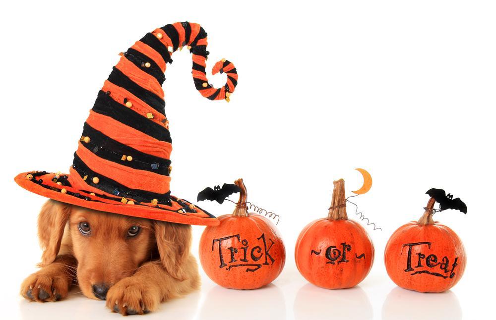 "A Winery Halloween: Dog ""Tricks & Treats"""